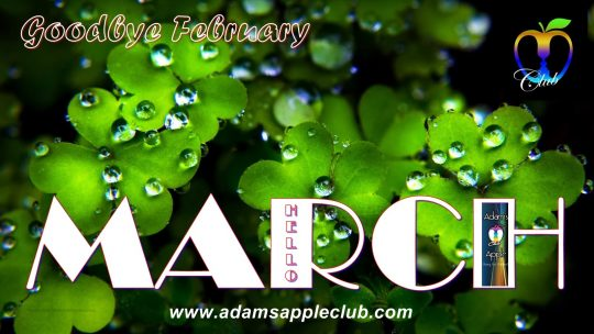 Adams Apple Club Chiang Mai MARCH 2019