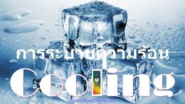 Stay Cool Cooling Adams Apple Club CNX