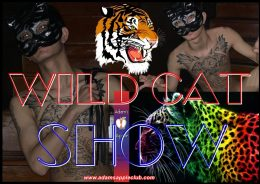 Wild Cat Show Adams Apple Club