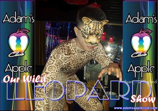 Our Wild Leopard Show Adams Apple Club