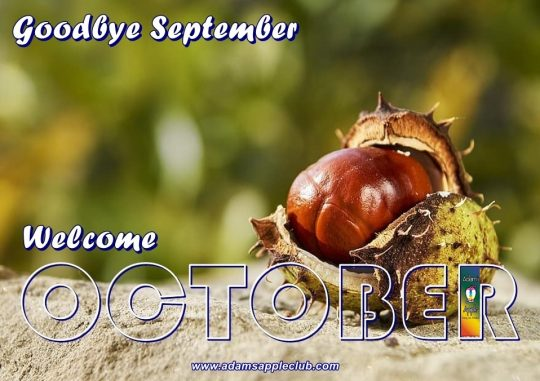 Welcome OCTOBER 2021 Adams Apple Club Chiang Mai. Gay Bar Thailand with live Ladyboy Cabaret Shows and Thai Boys LGBTQ